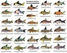 Poster de Peixes #tropicalfishtank #TropicalFishAquariumIdeas #TropicalFishKeeping