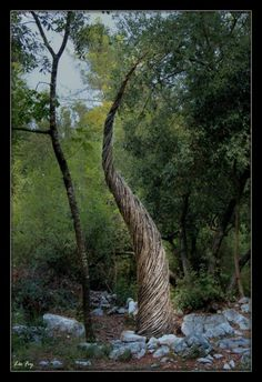 A Year in a French Forest. Spencer Byles 2011-2012