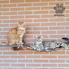 6b52793bd46bed THE BRIDGE - Furniture for cats. Mobili Per GattoLegno Naturale