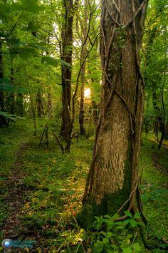 West Park Woods Sunset