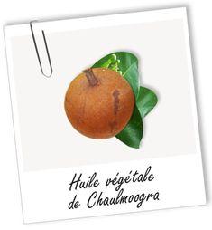 Huile végétale Chaulmoogra Aroma-Zone Orange, Fruit, Hair Loss