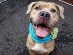 SAFE!  CHUCKLESDedicated to Saving NYC Shelter Animals