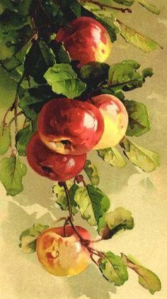 ideas for fruit painting watercolor catherine klein Apple Painting, Fruit Painting, China Painting, Watercolor Fruit, Watercolour Painting, Painting & Drawing, L'art Du Fruit, Fruit Art, Art Floral