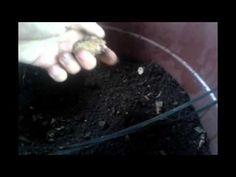 Emater responde - Composteira doméstica - Programa Rio Grande Rural - YouTube