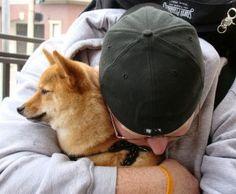 Website Helps Lost Pets Get Back Home
