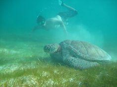 Edventure Tours Reviews - Tulum, Riviera Maya Attractions - TripAdvisor