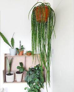 hang plants indoors 9583737495 #Besthangingplants