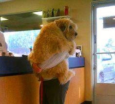 Veterinar Timisoara – Happy Pet – a fost infiintat in anul 2006 la initiativa medicului veterinar Fodor Lucian. Va asteaptam sa ne treceti pragul fi