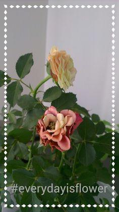 #everydayisflower #hergunbircicek
