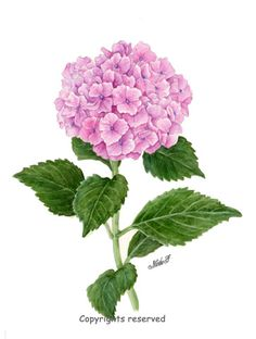 Botanical Flowers, Botanical Art, Hydrangea Painting, Outdoor Wall Art, Hydrangea Flower, Hydrangeas, Flower Phone Wallpaper, Vintage Botanical Prints, Flower Aesthetic