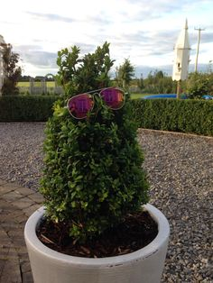Very cool box pyramid Box Hedging, Hedges, Plants, Living Fence, Plant, Shrubs, Planets, Natural Privacy Fences