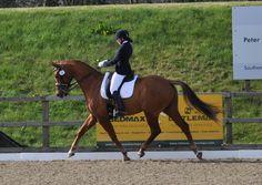 Dressage, Equestrian, Bespoke, Horses, Animals, Taylormade, Animales, Animaux, Horseback Riding