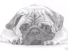 Pencil Drawings, Art Drawings, Art Sketches, Pug Cartoon, Scruffy Dogs, Gcse Art Sketchbook, Pug Art, Beautiful Sketches, Maltese Dogs