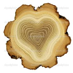 Heart of tree - growth rings of acacia tree - cross section — Stock Photo #10956050