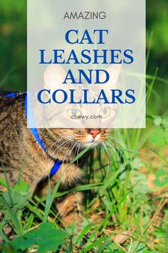 Train your kitty to walk on a leash for exercise and fun. Get the best kitty leashes and collars from chewy. The most affordable cat supplies for your cat. #cats #kittens #affiliate Best Litter Box, Cat Leash, Cat Products, Cat Care Tips, Cat Supplies, Collars, Kittens, Exercise, Good Things