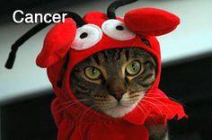 Cancer cat!