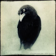 Raven Art Print, Crow Art, Halloween Decor, Gothic Art, Black and White Animal Photography, Fine Art Print, Bird Photography, Wall Decor