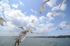 カモメ-gull- by mst47, via Flickr