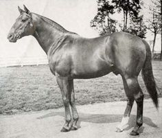 Mr Busher 1946 by War Admiral & Baby League