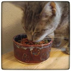 Moya loves to eat from her HaldeCraft food dish!