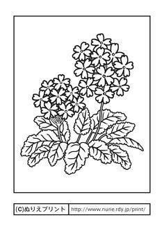 サクラソウ(主線・黒)/春の花/無料塗り絵イラスト【ぬりえプリント】