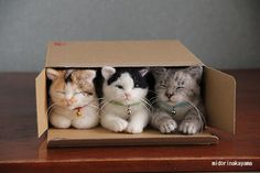 Three little cats lost their flats, and had to move in as one. They found that their flat was small for three cats, and one squatter had to run. Box Delivery, Special Delivery, Cute Cats, Pretty Cats, Beautiful Cats, Cat Fun, Animals Beautiful, Funny Cats, Cat In Box