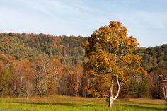 Cades Cove GSMNP take a drive on the 11 mile loop, look for wildlife, and stop to explore the historic buildings.
