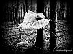Leaf in black and white