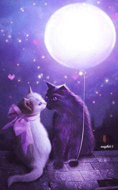 Katzen Liebespaar......