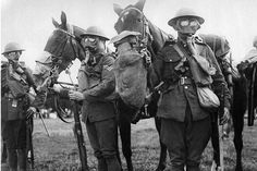 Untold story of the million horses sent to front line in First World War - They shared a horror like no other among the trenches of World War I.