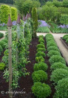 filari piante Val Joanis