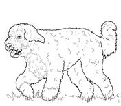 Portuguese Water Dog Coloring Page PagesGerman Shepherd