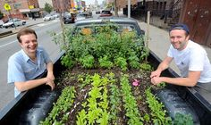 Urban Food Growing: The Truck Farm! In Curt Ellis and Ian Cheney filmmakers from New York put together this slightly insane food growing project. It is exactly what it sounds like- a growing space mounted on the back of a 1986 Dodge pick up truck!