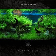 Want! A forest in your fish tank