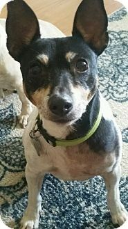 Check out Billy's profile on AllPaws.com and help him get adopted! Billy is an adorable Dog that needs a new home. https://www.allpaws.com/adopt-a-dog/toy-fox-terrier/4872054?social_ref=pinterest