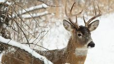5 Weaknesses Of A December Buck Preview Image