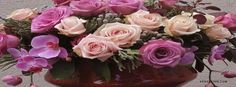 Orchid Roses