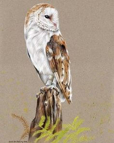 The completed Barn owl colour pencils drawing on toned paper.  This is up for…