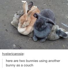 2 bunnies using another bunny as a couch