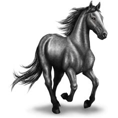 Argent 5180/1504.43, Caballo de montar Pura raza española - Caballow