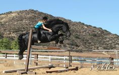 Sjoerd USEF Horse Of The Year Friesian Stallion Fun Page #1 Friesian Stallion