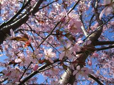 Idässä kaikki kukkii... näyttelyni Vuosaari – Kokoelmat – Google+