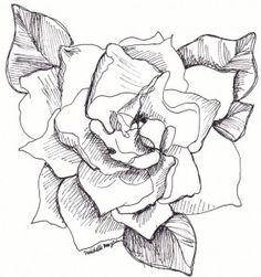 hand-drawn-gardenia