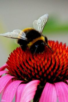 let's get planting #homesfornature for bumble bees like this little chap! | Perfect for bees #savethebees
