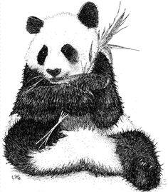 Pen and ink line art drawing of a Giant Panda (Ailuropoda melanoleuca)