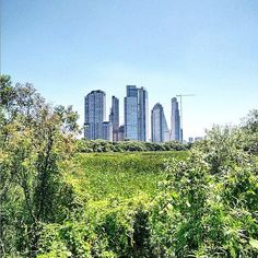 The central business district of Buenos Aires, Argentina as seen from the Buenos Aires Ecological Reserve. In the center sits the El Faro Towers, which are two, twin interconnected towers located in the neighborhood of Puerto Madero. Buenos Aires is the capital and largest city of Argentina, and is one of the largest cities in South America. Photo credit Instagram user: @lubodomo #CitiesWeLiveIn #CBRE #BuildOnAdvantage