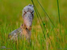 Cosas curiosas: Fotos Tomadas por el National Geographic