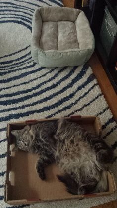 Cats don't need fancy cat beds.  Just throw an empty box on the floor.