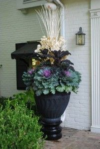 Container Gardening with Kale