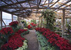 Full range greenhouse photo